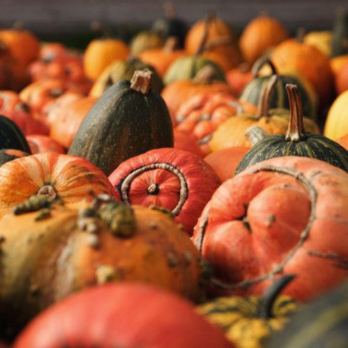 pumpkins amsterdam netherlands
